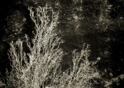 http://www.schroederworks.com/files/gimgs/th-100_65_Trees_v3.jpg